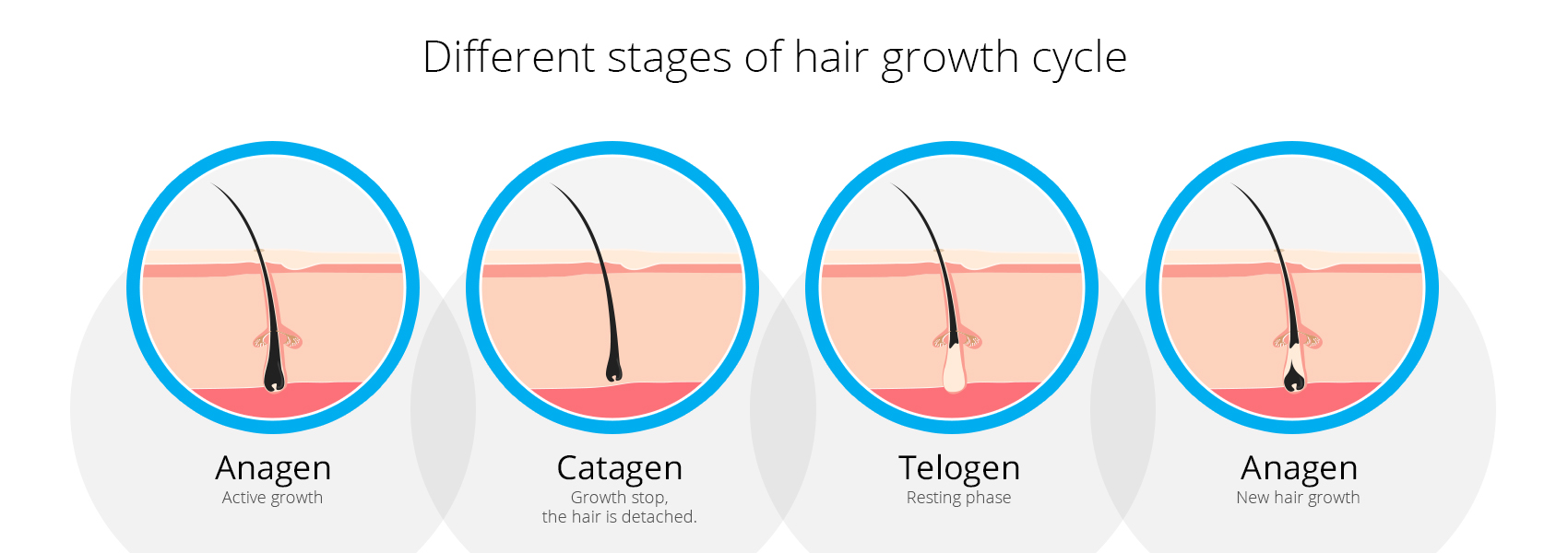 Diagram illustrating four different stages of hair growth
